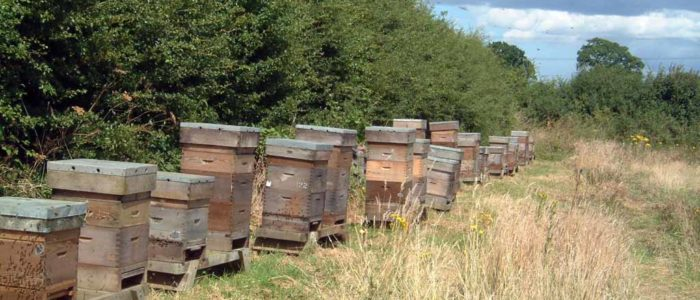 Hives in an out Apiary